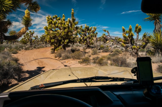 Driving Through Joshua Trees Along the Mojave Road